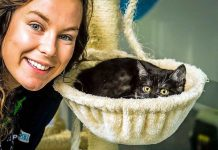 pet care for family violence victims